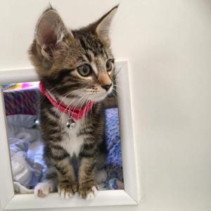 cats42017